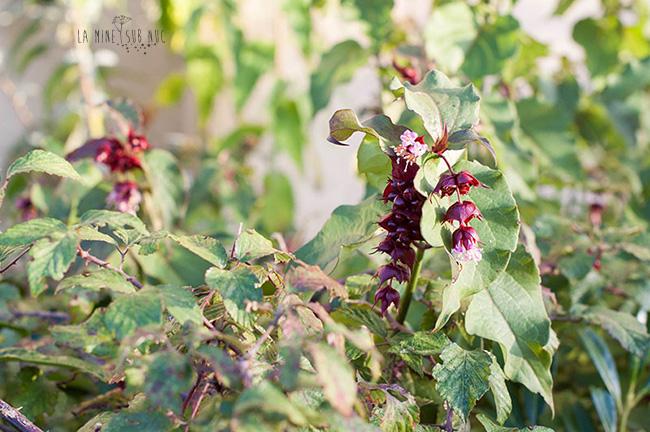 floare-rosie-de-toamna